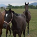 Horse — Stock Photo #30573313