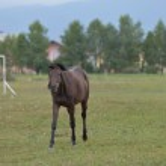 Horse — Stock Photo #30573513