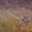Field with wild flowers. summer landscape — Stock Photo