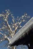 Baita in inverno — Foto Stock