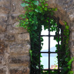 Window old plant — Stock Photo #5383479