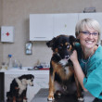 Female veterinary — Stock Photo #8772142