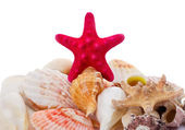 Seashells background — Stockfoto