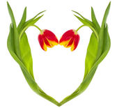 Red-yellow tulips heart — Stock Photo