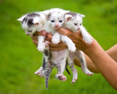 Three little kittens in hands — Stock Photo