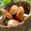 Basket full of boletus edulis — Stock Photo