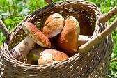 Sepet çörek mantarı ile dolu — Stok fotoğraf