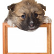 Puppy with frame - Stock Photo