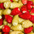 Wild strawberries - Stock Photo
