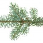Branch of fir-tree — Stock Photo #7977725