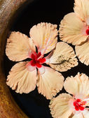 Hibiscus blooms swimming — Stock Photo
