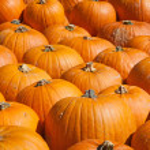 Colorful pumpkins — Stock Photo #13210105