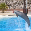 Bottlenose dolphin — Stock Photo #14032111