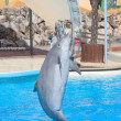 Bottlenose dolphin — Stock Photo #14039199