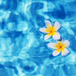 Tropical frangipani flower in water — Stock Photo #17377655