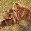 Stock Photo: Brown bear and cub