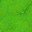 Green leaf seamless texture — Stock Photo