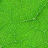 Textura de folha verde sem costura — Fotografia Stock