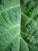 Structure of green leaf — Stock Photo