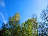 Mavi gökyüzü ve bulutlar — Stok fotoğraf