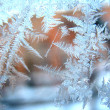 Stock Photo: Frosty pattern on winter window