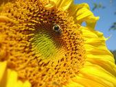 Inseto e a flor — Fotografia Stock