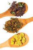 Medicinal herbs. — Stock Photo