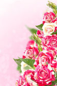 Roses on beautiful background. — Stock Photo