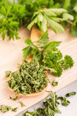 Dried herbs parsley and celery on a wooden spoon. — Stock Photo