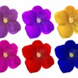 Set of sin colors violet flowers on white — Stock Photo