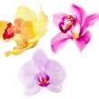 Three isolated orchide flowers set — Stock Photo #24180881