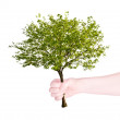 Green tree in human hand isolated on white - Stock Photo