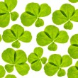 Tiled background with isolated clover leaves — Stock Photo
