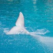 White dolphin tail in water — Stock Photo
