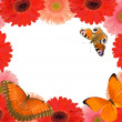 Stock Photo: Gerberas flowers frame with three butterflies