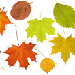 Stock Photo: Eleven leaves collection on white