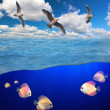 Stock Photo: Gulls flying above sewith fishes