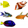 Five isolated tropical fishes — Stock Photo
