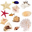 Set of isolated invertebrates and fishes — Stock Photo