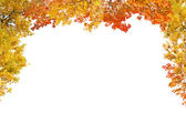 Red and yellow fall foliage half frame — Stock Photo