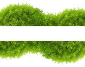 Green tree foliage band isolated on white — Stock Photo