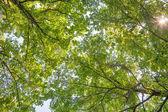 Fondo de follaje verde brillante de verano — Foto de Stock