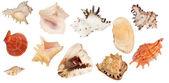 Set of eleven shellfishes isolated on white — Stock Photo