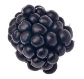 Single blackberry isolated on white — Stock Photo