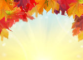 Multicolor fall maple leaves half frame — Stock Photo
