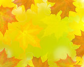 Golden maple leaves abstract background — Stock Photo