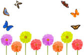 Bright flowers and butterflies isolated on white — Stock Photo