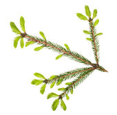 Isolated spring fir green branch — Stock Photo