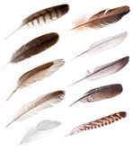 Ten feathers from different birds — Photo