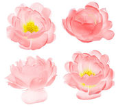 Set of isolated light pink brier flowers — Stock Photo
